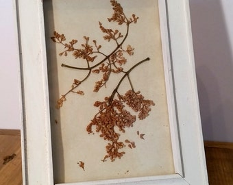 Pressed Flower Art, Dried Fall Colors Flower Art