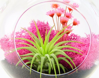 "4"" Round Glass Air Plant Terrarium Kit / Pink Paradise / Free Shipping"