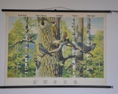 Original Vintage Mid Century Ornithology Print. Birds. Small Birds. Pull Down School Chart. Sweden. 1141