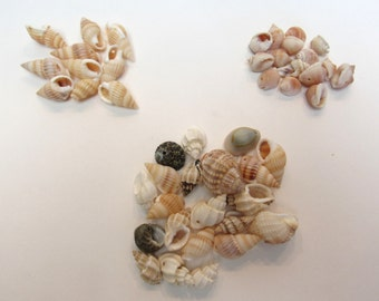 Drilled Seashell Beads (46) Small Whelk Cowrie Tulip Natural Mixed Sea Shells Wholesale Jewelry Jewellery Making Supplies CrazyCoolStuff