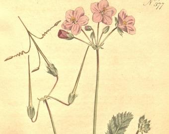 Antique print, Flower art, Vintage print, Nature, Botanical art, Flower print, Wall decor, Nature art, Nature decor, Flower print art, 377