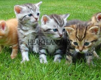 """Digital Download Photo """"Kittens"""" Wall Art"""