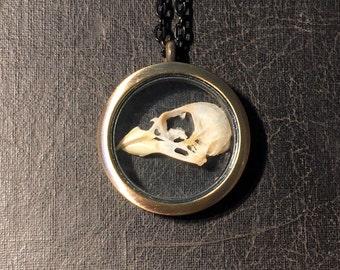 REAL Split Half Finch Bird Skull Glass Window Locket Ossuary Taxidermy Specimen Necklace