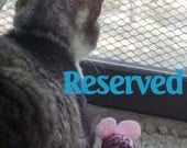 Reserved for Estelle...Wholesale