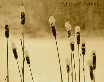 Snowy Cattails, Maine Photography, Cobscook Bay State Park, Sepia Print