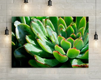 Succulent Canvas Art, wall art canvas, canvas print, nature art, nature photography, nature prints