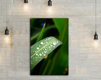 Grass Blade Canvas Art, wall art canvas, canvas print, nature art, nature photography, nature prints