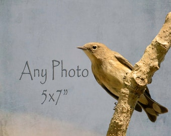 5x7 Art Print Your Chioce Bird Print Nature Print 5 by 7 Fine Art Photography Gifts under 20