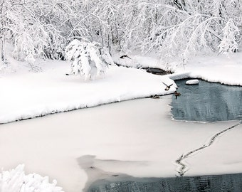 Waterfowl Photography, Water Birds in the snow, Swimming Dabbling Ducks, Mallard Duck Prints, Winter Pond Print, Wildlife Fine Art Print