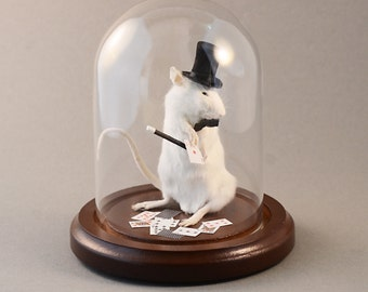 Taxidermy Magic Mouse Magician