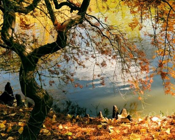 Japanese Maple Tree Botanic Fish Pond Reflections