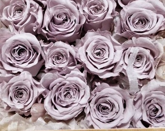 Preserved Victorian Lilac Roses, Lavender Preserved Roses, Preserved Light Lavender Mini Roses  Simply Beautiful !
