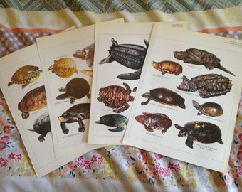 4x Full Colour Plates - Turtles