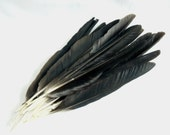 English Crow Quills Wing Quill Feathers Smudge Taxidermy Carrion Fly Tying Crafts Art Totem, Morrigan, Dark Goddess, Witch, Hoodoo, Conjure.