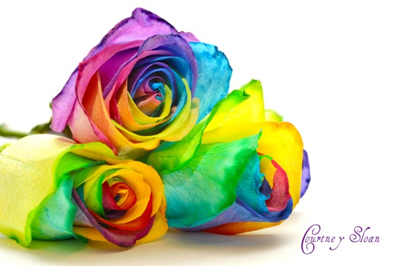 Rainbow Roses-colorful, pop of color, bright, cheerful, unique, beautiful, flowers, gift idea, bold colors, colorful home decor, accent