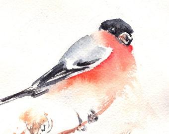 Bullfinch Original Watercolor Painting, Bird Watercolour Art