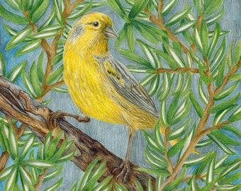 Yellow Canary Print