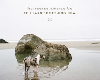 Lessons From the Water bowl - Volume 3 - Prints - Learn Something New