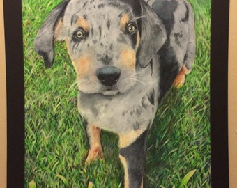 "Catahoula Cur Puppy by Artist Emily Dawson 16"" x 20"" matted prismacolor"