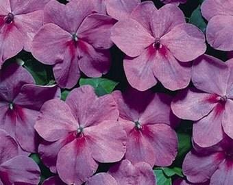 Impatiens Tempo Lavender * 25 Seeds