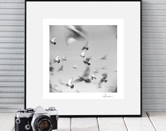 RUSH - birds picture, square black and white wall decor, minimal style, nature, art photography, giclee print signed by author