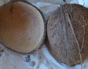 Coconut Halves with Fiber, Natural Coconut Shells, Coconut Cups, Real Coconut, Coconut Shell, Wholesale Coconut Cups