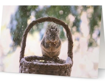 Woodland Animal Card, Squirrel Cards, Squirrel in Snow, Nature Card Packs, Animal Card Sets, Wildlife Photo Card,10 Card Pack,Christmas Card
