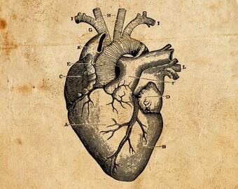 Vintage Heart. Vector, PNG, JPEG. Digital download. Art, print, t-shirts, merchandise. Old, illustration, diagram, medical, anatomy.