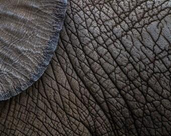 Elephant Skin Abstract Print, 4x6, 5x7, 8x10 or 8x12 Photography, Fine Art, Wall Art, Home Decor