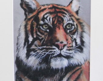 Tiger - Limited Edition Mounted A3 print of a beautiful Tiger