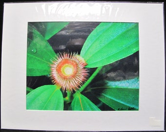 R. Lewis Hooten Uncommon Images Photograph Floral Signed and Matted