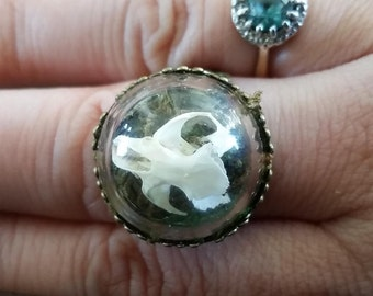 Real Mouse Skull Ring