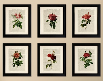 Set of 6 FRAMED Art Prints on old antique book page - Flowers, Roses, Botanical, Vintage Wall Art Print Encyclopaedia Dictionary Page