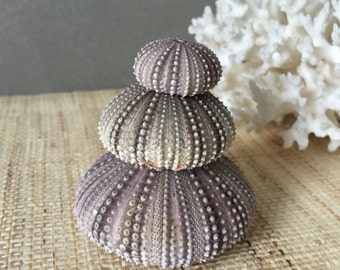 Sea urchins |  natural seashells | seashells | natural sea urchins | wedding decor |  beach decor | coastal decor