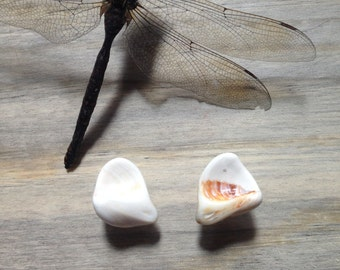 Pacifica Collection // Sea Shell Stud Earrings