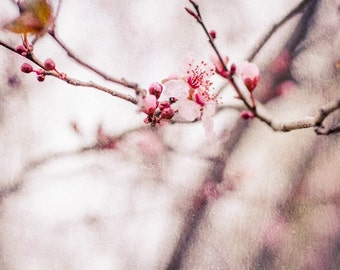 Cherry Blossom Spring Photo, Spring Photography, Trees, Pink, Nursery Art, Room, Nature, Pastel, Tree Photo, Spring Tree Photo, Nature Print