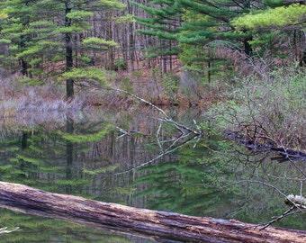 New England Pond