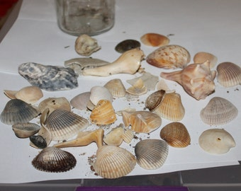 SALE: Ocean Shells and Pieces and The Jar They go in,  Look Carefully at Them,  Nautical Decoration, Collectible, Home Decorations w Bottle