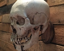 SKULL NOT INCLUDED Wall Hanging Authentic Real Human Steampunk, Art Resin Sculpt skull, Replica Skull, Life Size Skull Stand