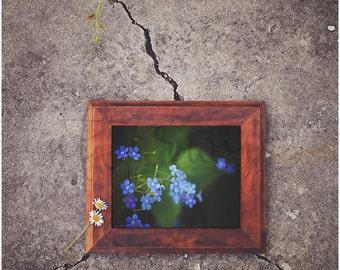 Flower Photography Print. Flower Print. Flower Photography. Blue Flower Photo. Floral Wall Art. Nature Print. Botanical Art. Fine Art Print.