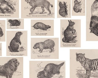 3 Printable A4 PDF Victorian Animals Collage Sheets for Crafting - Tigers to Mole Rats - Vintage Decoupage Paper, Scrapbook, Collage