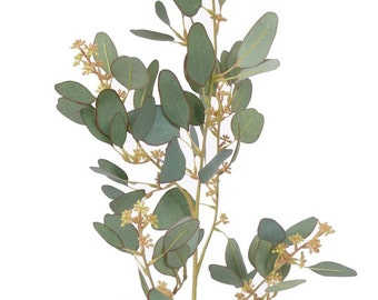 Artificial Eucalyptus spray branch | Eucalyptus branch | Artificial leave| floral Art | eternal flowers | Spring Flower - Artificial plant