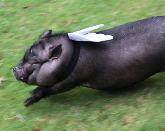Ready for takeoff! Christmas, Mini Pig Clothes, Angel Wings, Dog Wings, Pet Costume, Costume Accessories