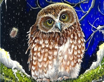 A Winter's Dreaming - Boobook Owl