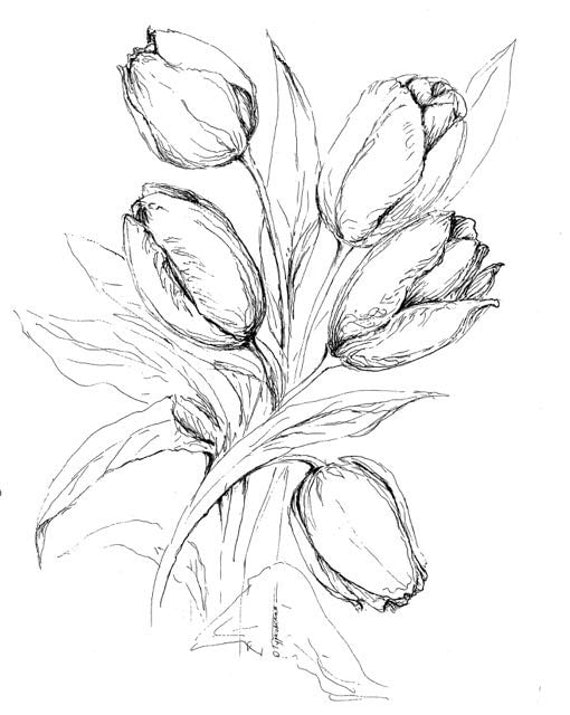 Line Drawing Of Tulip Flower : Tulips coloring book page printable color in by