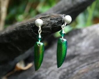 Emerald/Jewel Beetle Wing Earrings