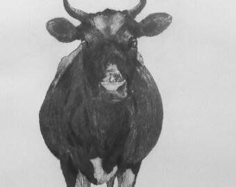Cow intaglio print, drypoint; Limited Edition of 25, Original Artwork signed by the artist Wendy Jane Sheppard, ArtWendyJaneSheppard