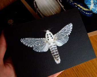Greetings Card - Zeuzera pyrina 'Leopard Moth'