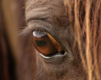 Photographic Print - Horse's Eye Photo Print - Photography of Horses
