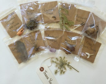 10 Item Nature Curiosity Collection Grab Bag:    Nature Study, Nature Items, Charlotte Mason, Real Nature